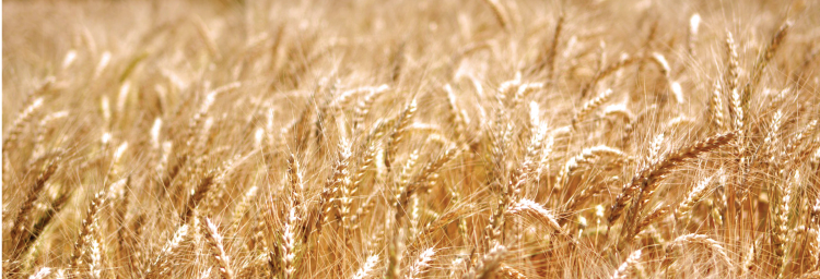 Céréales et légumineuses à grains