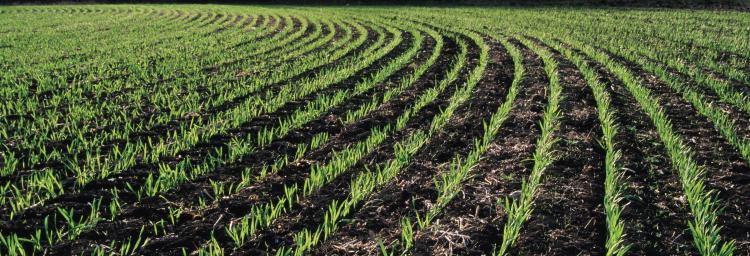 Résilience de l'écosystème agricole