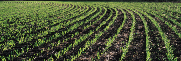 Agro-Ecosystem Resilience / Clean Technologies